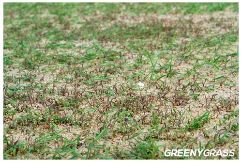 สนามฟุตบอลหญ้าจริง ระบบหญ้าเทียมผสม