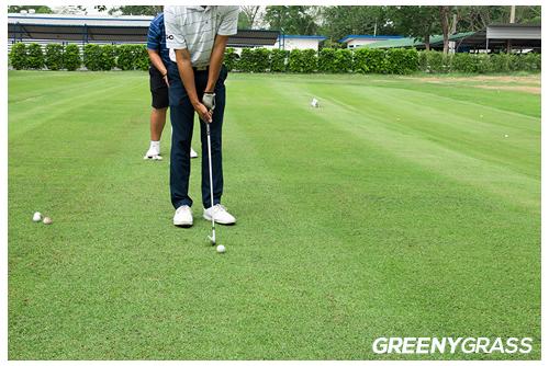 หญ้าเทียมผสม สนามกอล์ฟ