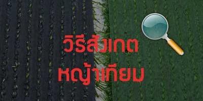 วิธีสังเกต หญ้าเทียม
