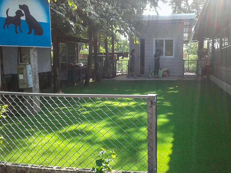 หญ้าเทียมสำหรับสุนัข โครงการบ้านรักหมา (ม.มหิดล)