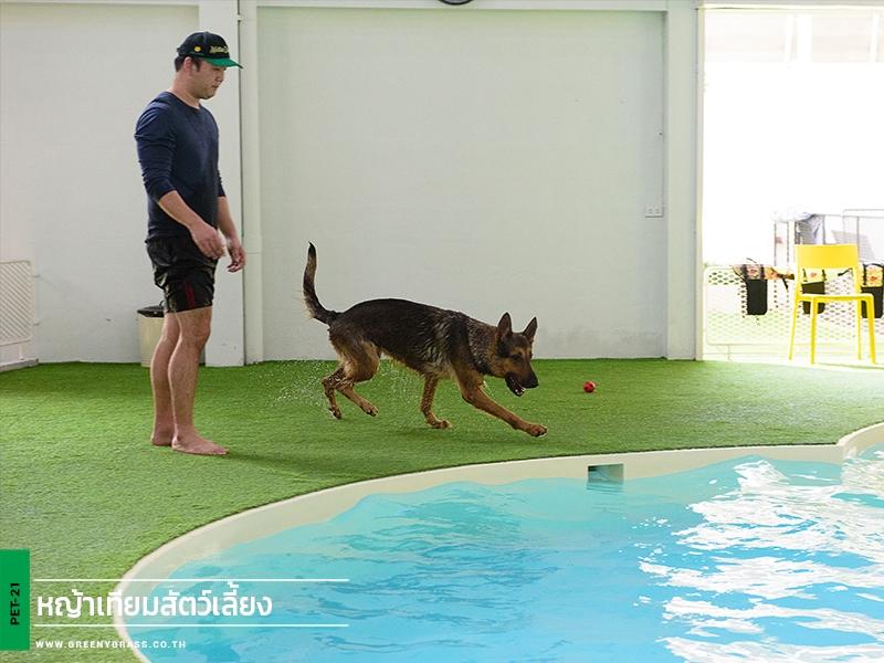 โรงแรมสุนัข Dog's Tale (หญ้าเทียมpet)