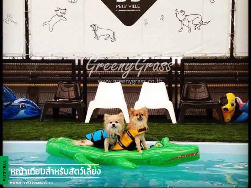 ปูหญ้าเทียมศูนย์ฝึกสุนัข Pets' Ville