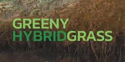 Greeny Hybrid Grass ระบบเสริมความแข็งแรงของรากหญ้าจริง (หญ้าไฮบริด)