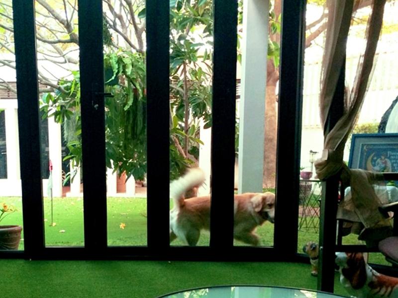 แต่งสวนหญ้าเทียม indoor/outdoor