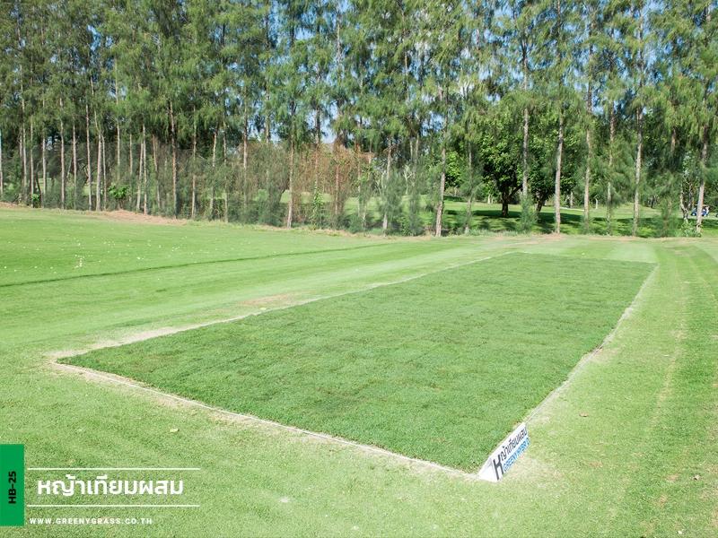 หญ้าเทียมผสม Driving Range สนามกอล์ฟ Watermill Golf Club & Resort