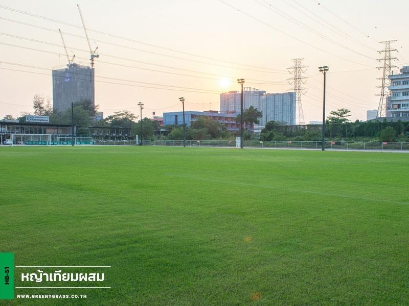 สนามฟุตบอลหญ้าจริงไฮบริดกรีนนี่กราส พัฒนาการ