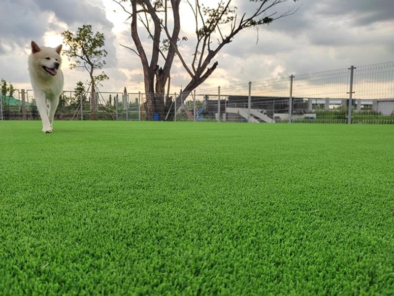 สนามวิ่งเล่นหญ้าเทียม ฟาร์มสุนัข ASIA BIG DOG