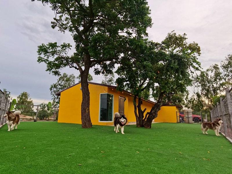 ติดตั้งสนามหญ้าเทียม ฟาร์มสุนัข Nectar Shire